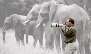Photographing Elephant in Zimbabwe